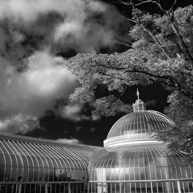 """Kibble Palace, Mono"" stock image"