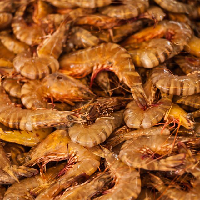 """Shrimps close up"" stock image"