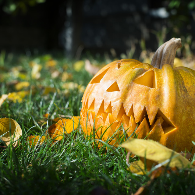 """Pumpkin on grass and autumn leaves"" stock image"