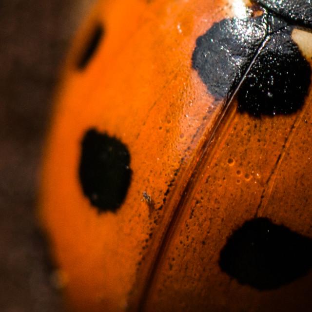 """Ladybird 1"" stock image"