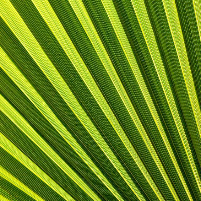 """Beautiful palm leaf"" stock image"