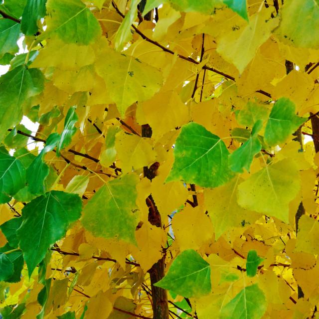 """Leafy"" stock image"