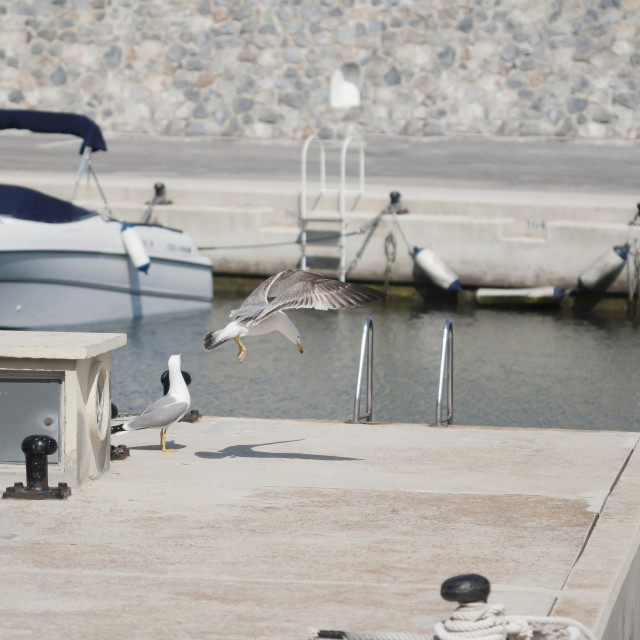 """seagull flying on port"" stock image"