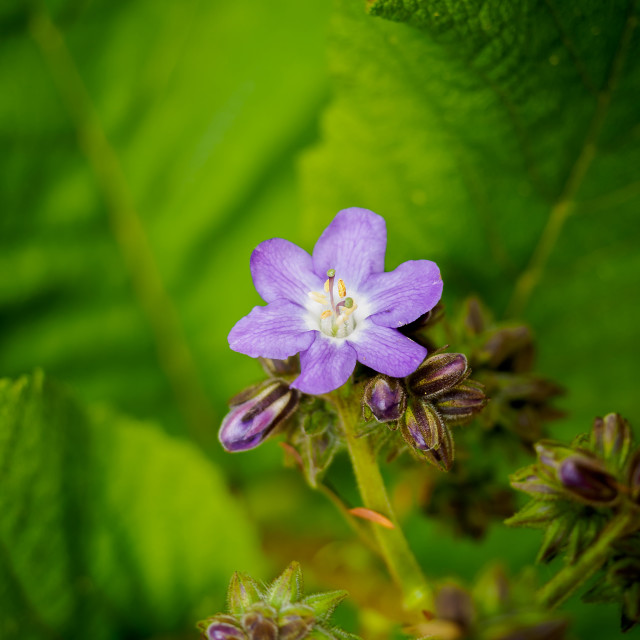 """Beautiful spring flowers"" stock image"
