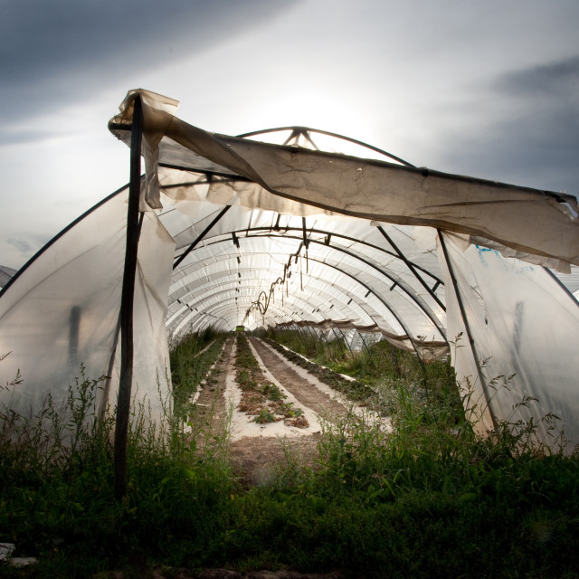 """Greenhouse On A Stormy Day"" stock image"