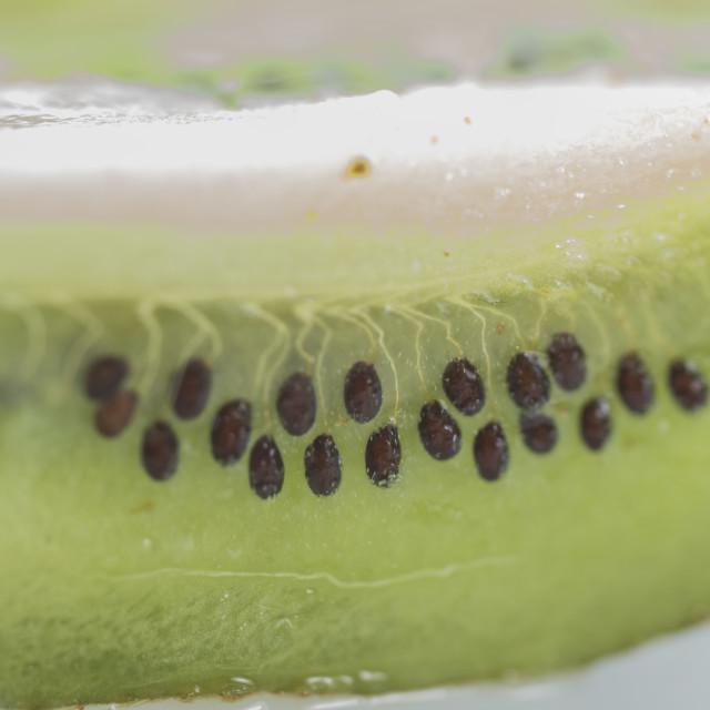 """""""The Kiwi Fruit 2"""" stock image"""