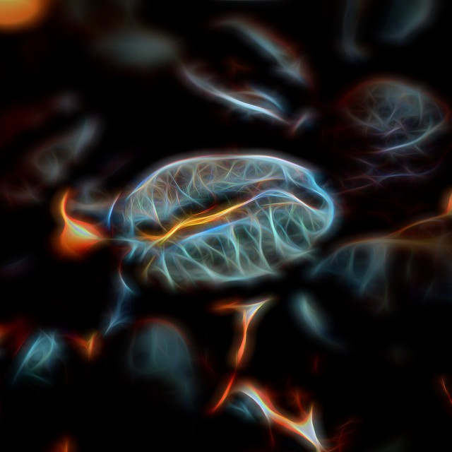 """""""Glowing Coffee Bean Macro 3"""" stock image"""