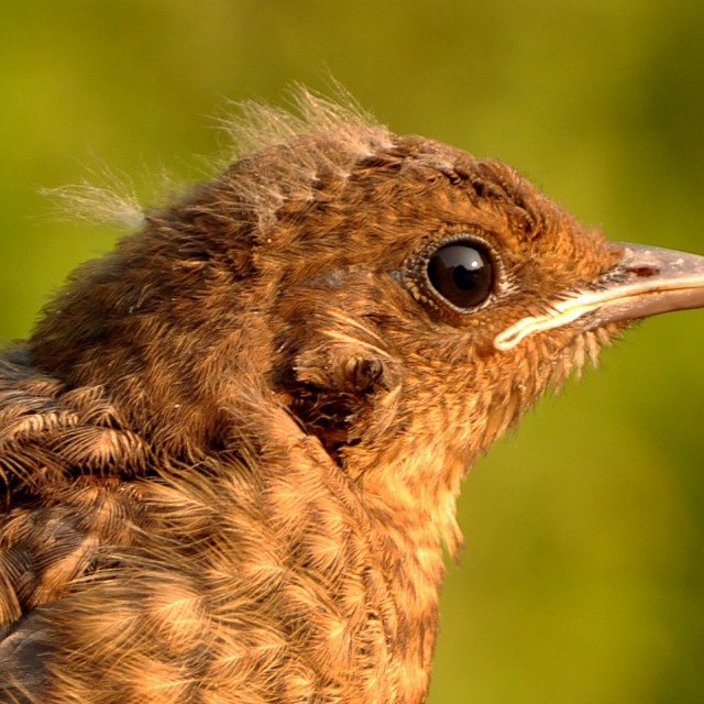 """Young bird at sunset"" stock image"