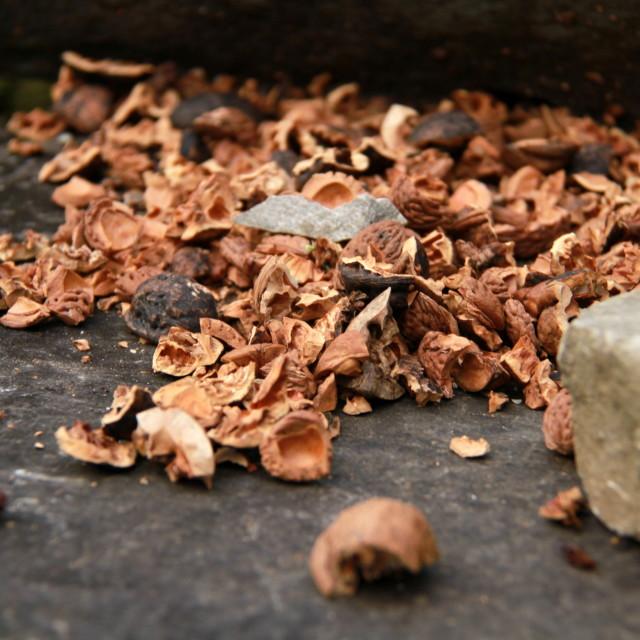 """Broken nuts"" stock image"