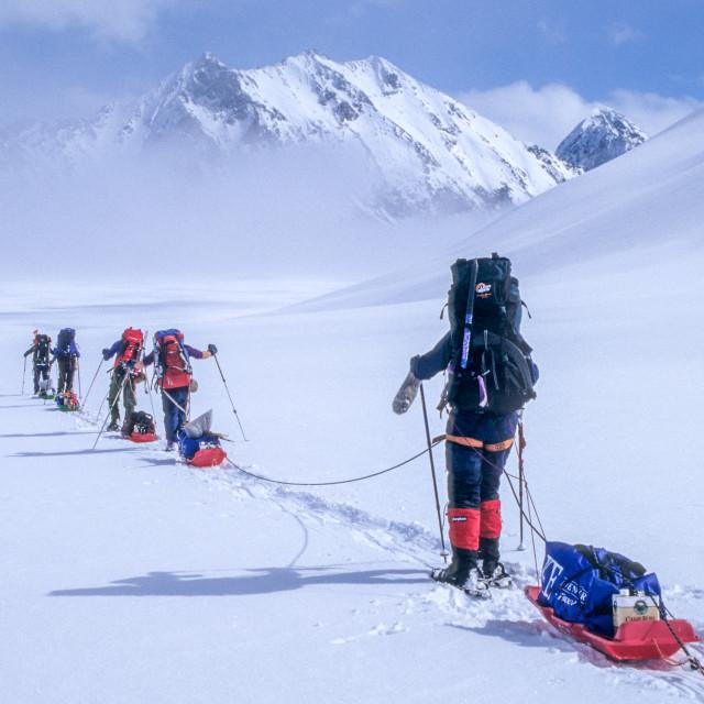 """Sled hauling Alaska"" stock image"