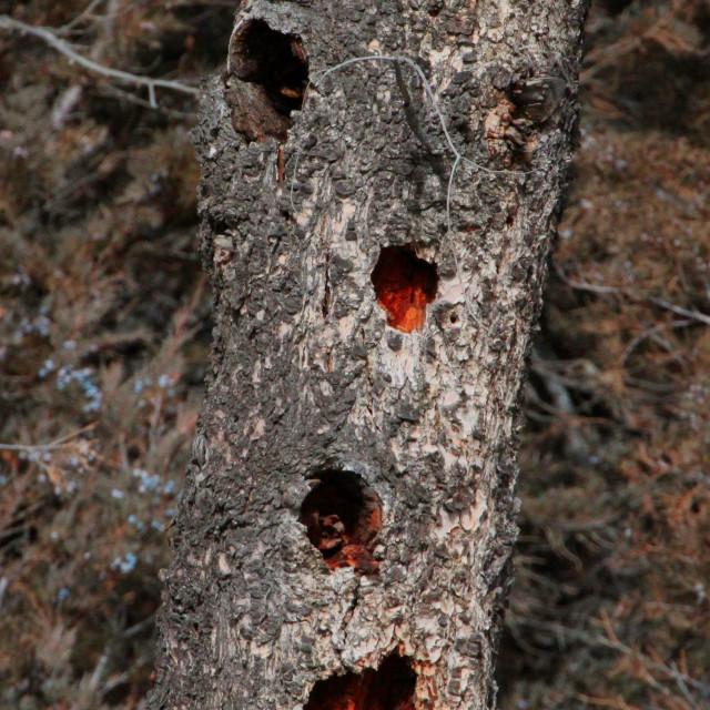 """""""Woodpecker Condo"""" stock image"""