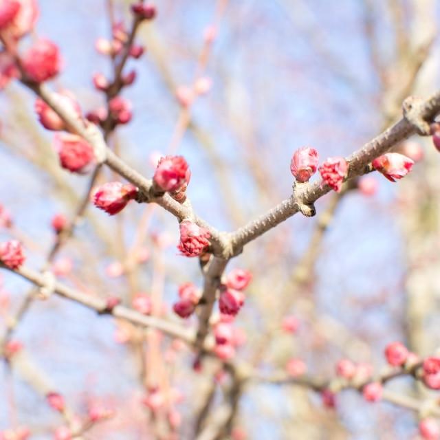 """Spring tree blossom"" stock image"