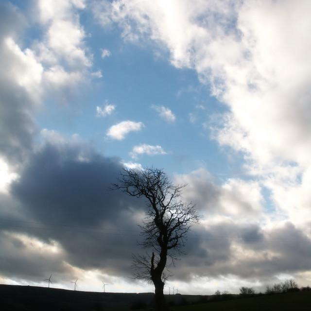 """Tree and Sky"" stock image"