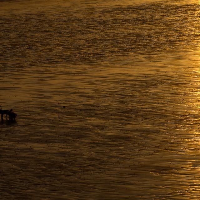 """Dog Walking at Dawn"" stock image"