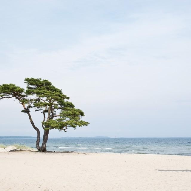 """Single beautiful tree on sandy beach"" stock image"