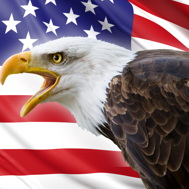 """a beautiful bald eagle with a background of a usa flag"" stock image"