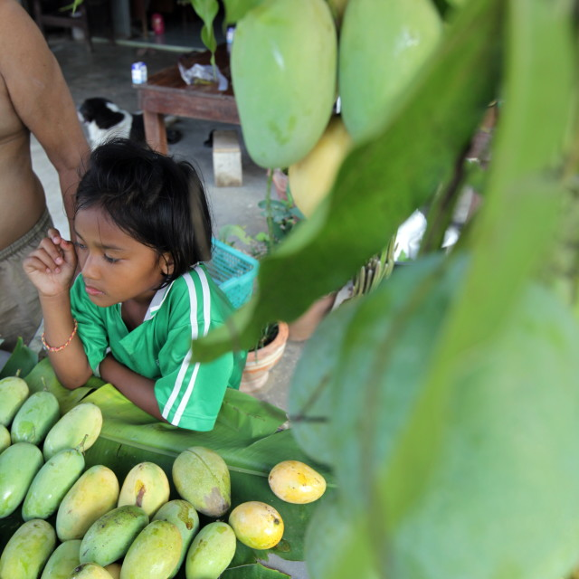 """ASIA THAILAND HUA HIN SHRIMP FARM"" stock image"