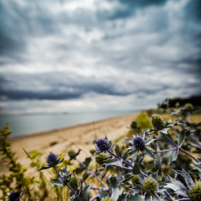 """""""Thistle in the storm"""" stock image"""