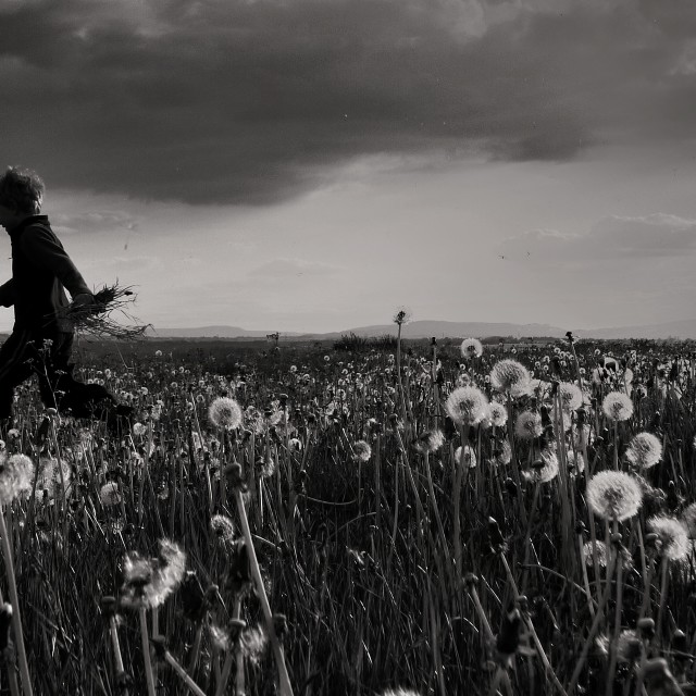 """Running through dandelions"" stock image"