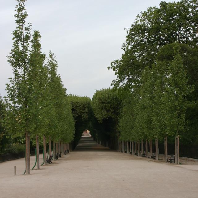 """""""Trees in Les Tuilleries, Paris"""" stock image"""