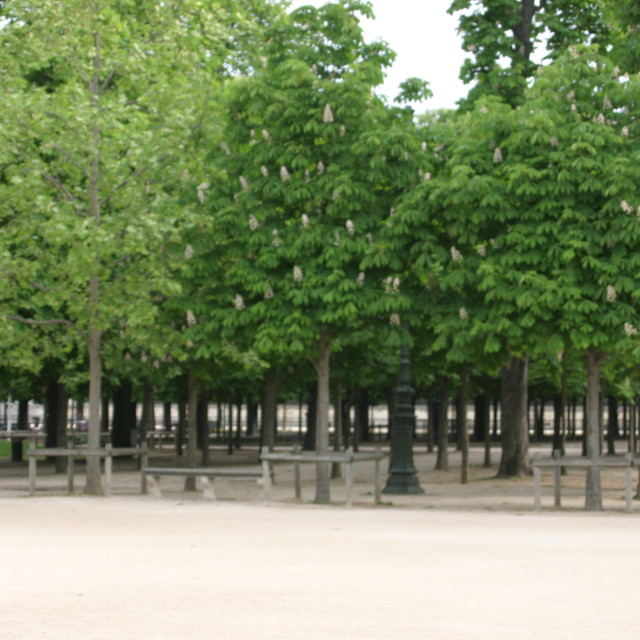 """""""Trees in Les Tuilleries"""" stock image"""