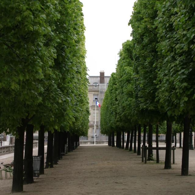 """Avenue of trees, Les Tuilleries"" stock image"
