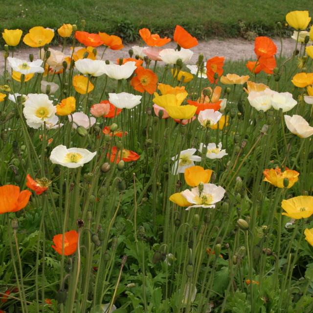 """""""Flower bed - Jardin des Plantes, Paris"""" stock image"""