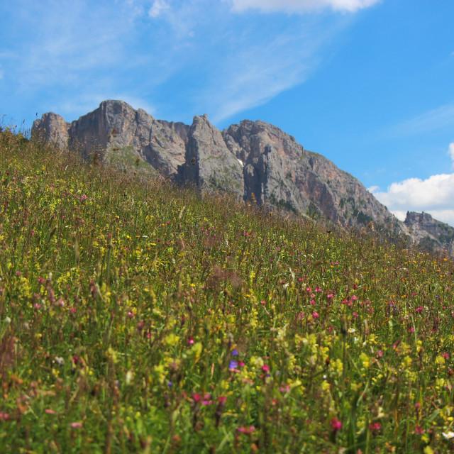 """""""Alpine Wild Flowers 1"""" stock image"""