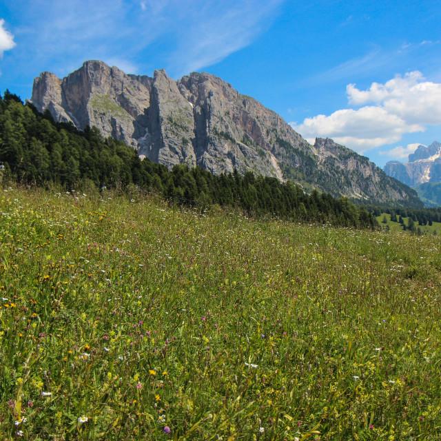 """""""Alpine Wild Flowers 2"""" stock image"""