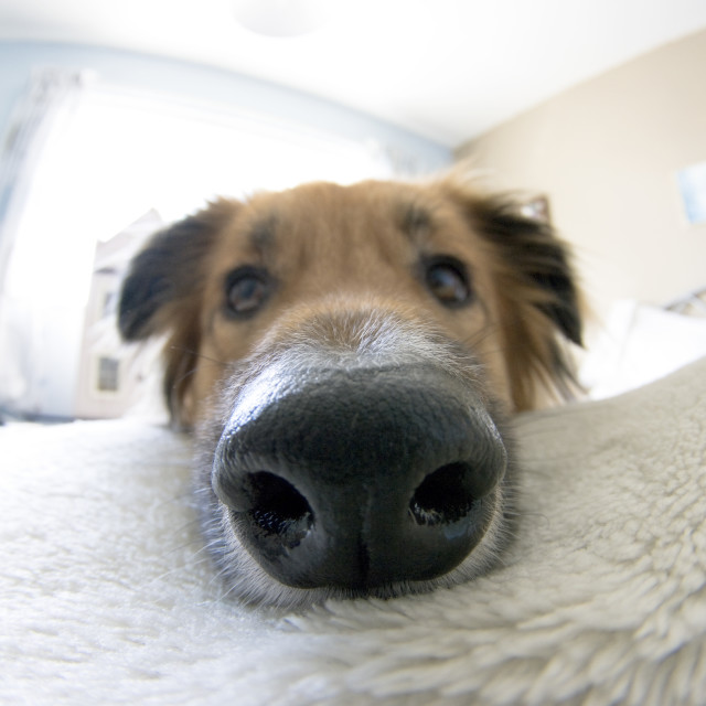 """Big Nose"" stock image"