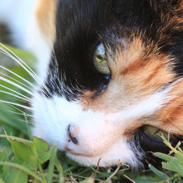 """""""Cat lying down on grass"""" stock image"""