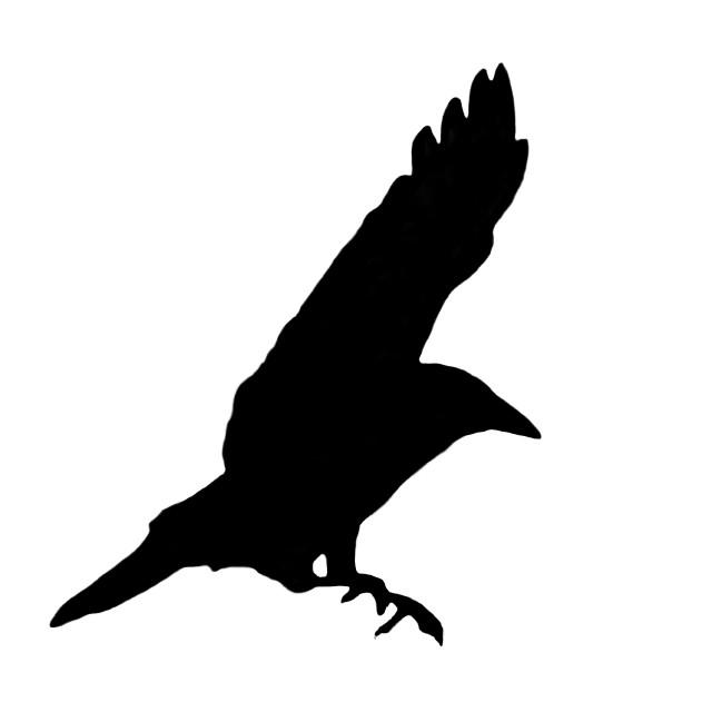 """Black Crow"" stock image"