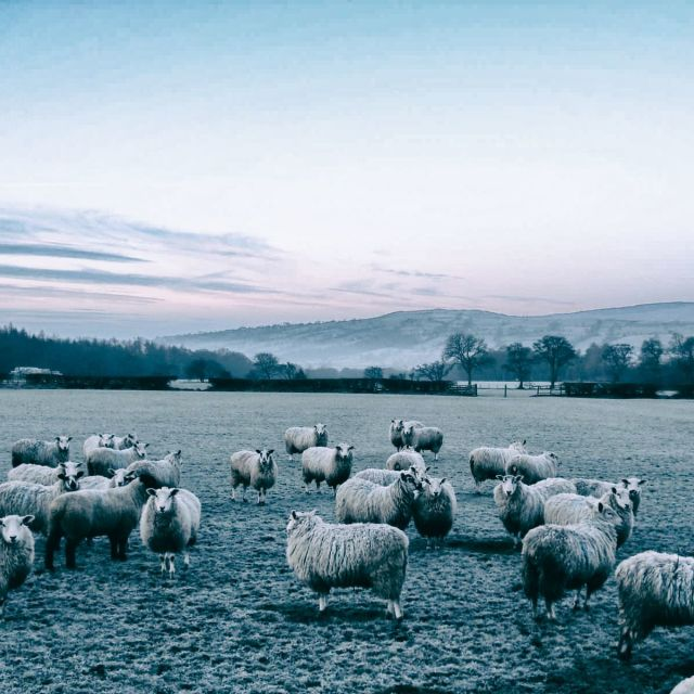 """Sheep in Winter"" stock image"
