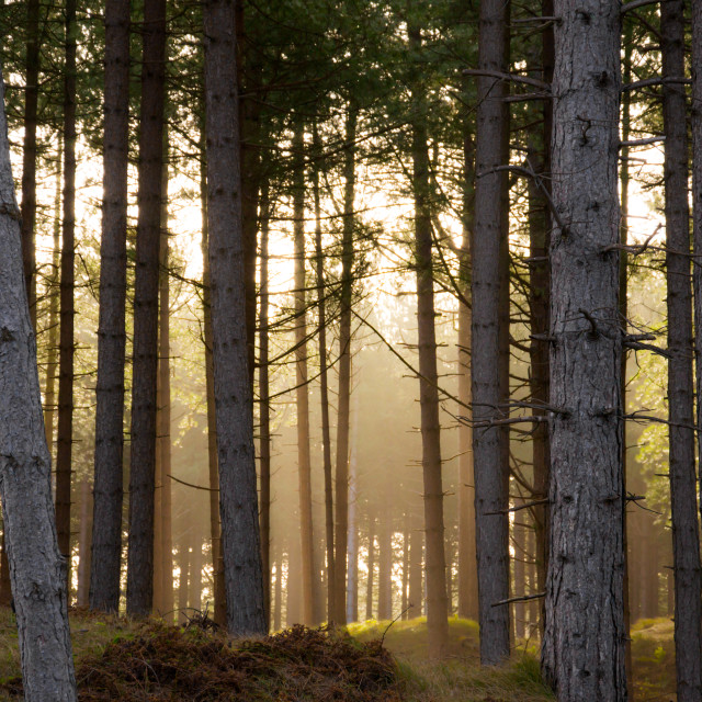 """""""Forest (Edit)"""" stock image"""