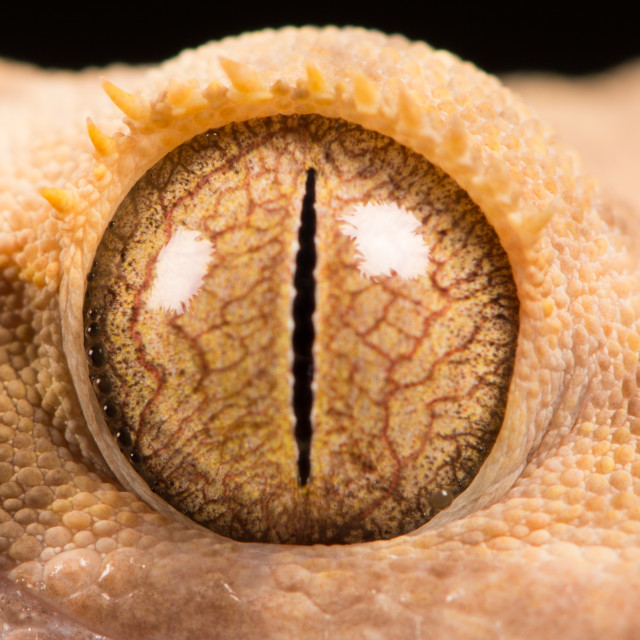"""Gecko's Eye"" stock image"