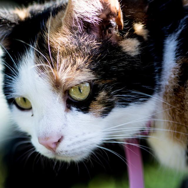 """Cat's Glare"" stock image"