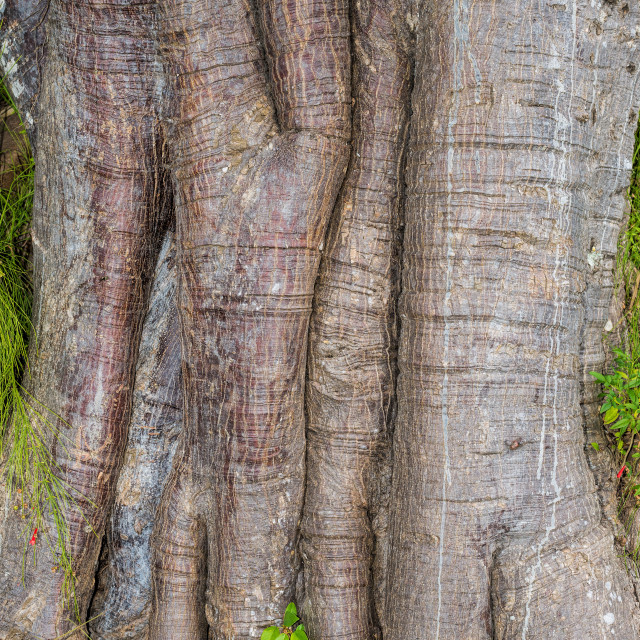 """Tree trunk - pattern / background"" stock image"