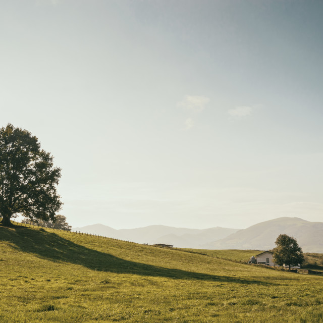 """""""Tree in the meadow"""" stock image"""