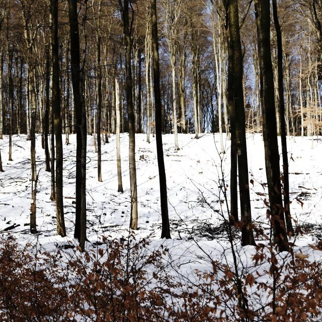 """Winter 14"" stock image"