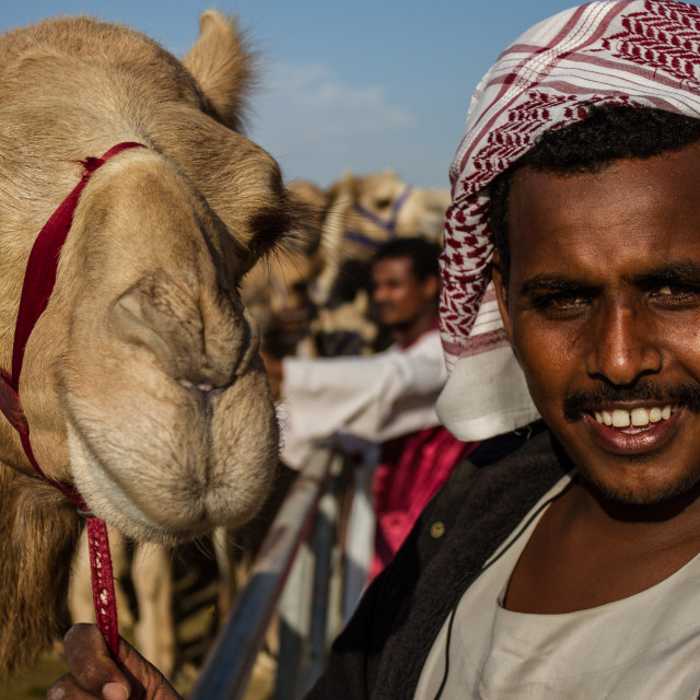 """One man and his camel."" stock image"