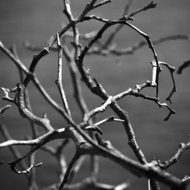 """Twigs in black and white"" stock image"