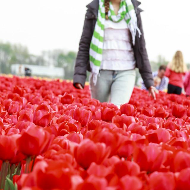 """Girl in red tulips"" stock image"