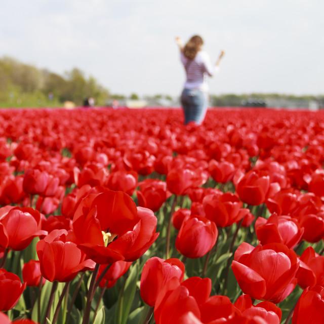"""Flower fileds"" stock image"