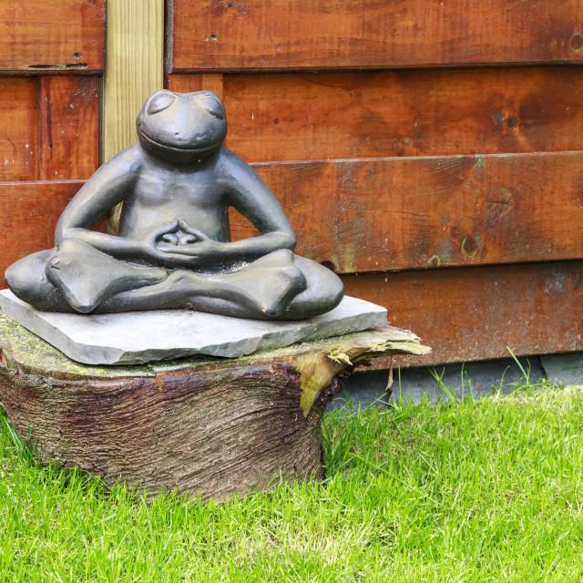 """Meditating Frog"" stock image"