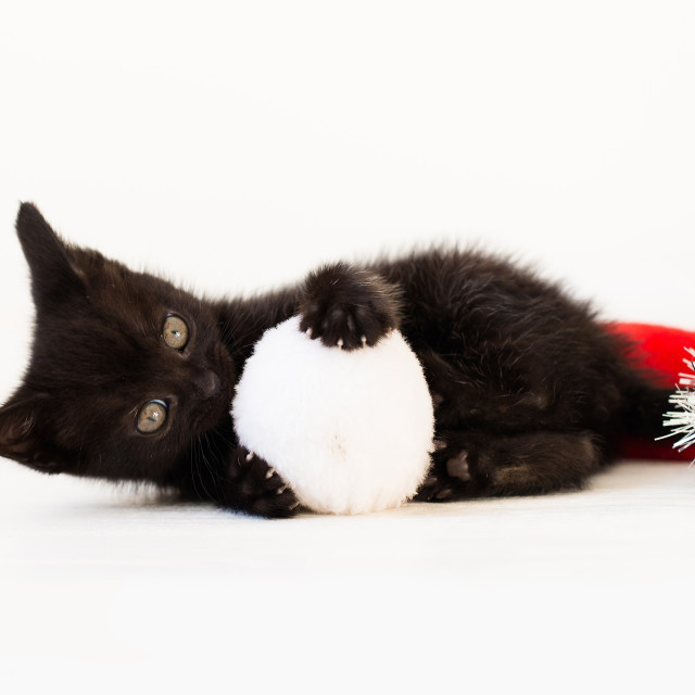"""Kitten playing with Christmas Pom Pom"" stock image"