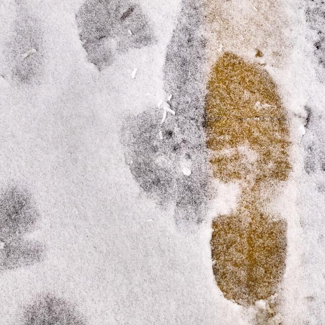 """Snowy Footprint"" stock image"