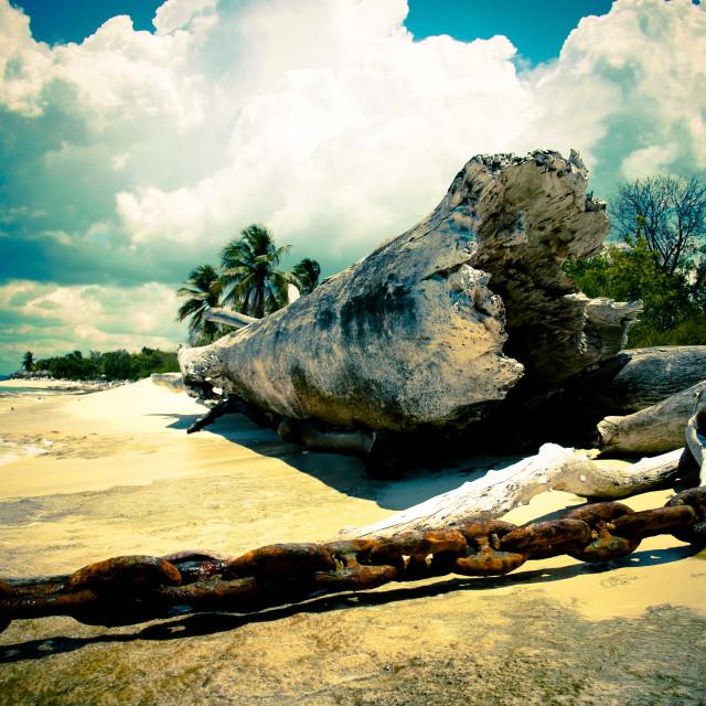 """Tropic Island"" stock image"