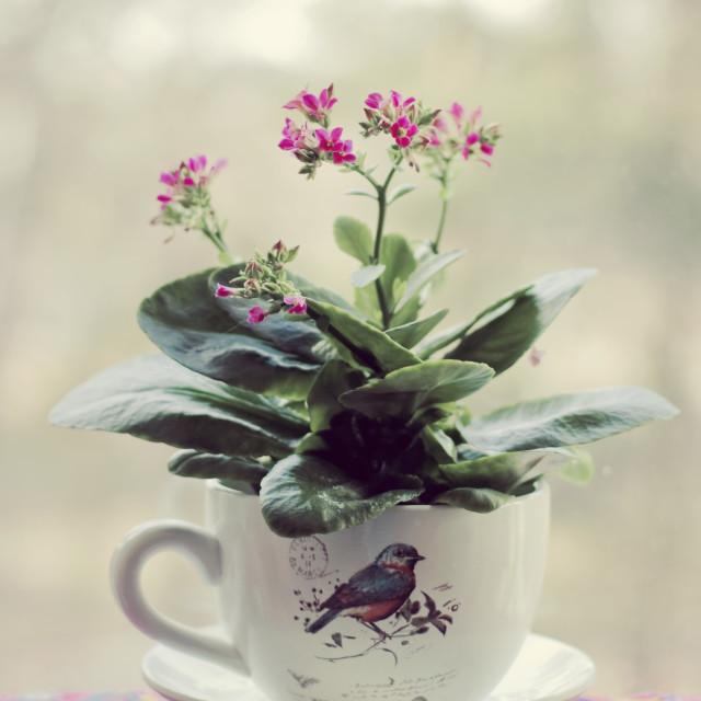 """""""Flower pot"""" stock image"""