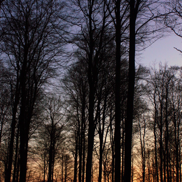 """""""Sunset in the Forest"""" stock image"""