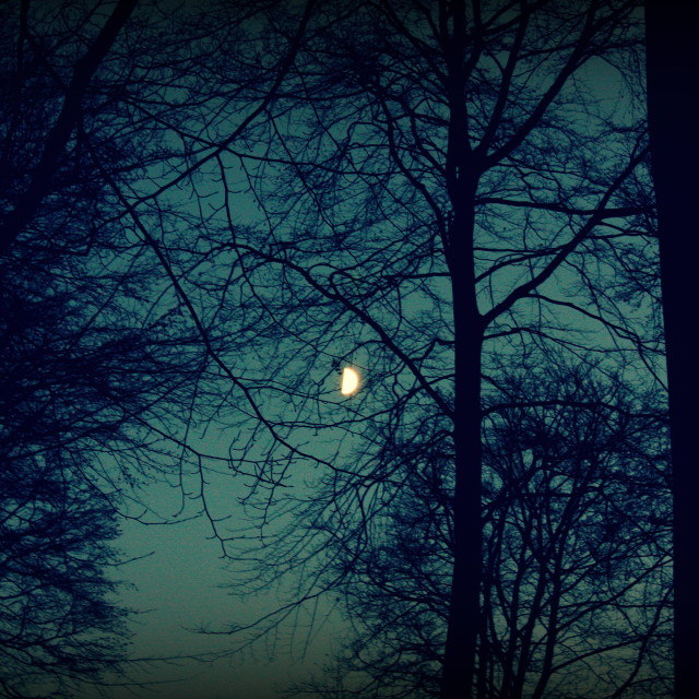 """""""Moonlit Forest"""" stock image"""